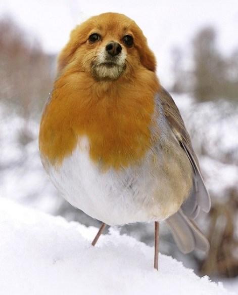 BirdDog6