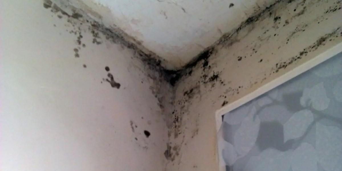 humedad en paredes - Escalivada de verduras Thermomix