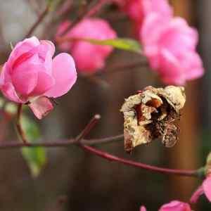 2852bc041a164def26a328bf666abe1d - ▷ Las rosas del prado 📖