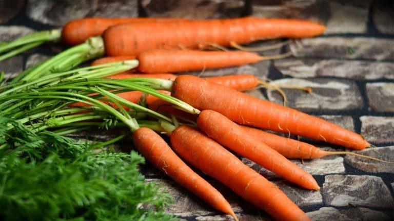 carotte recette