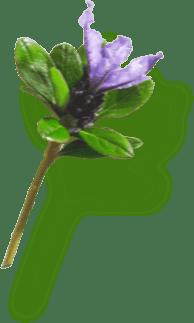 Rechiol - антивозрастная сыворотка