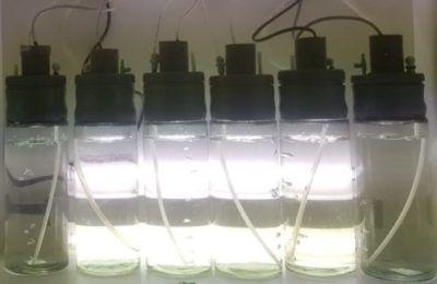 Réacteurs à phytoplancton