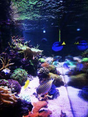 Aquarium recifal