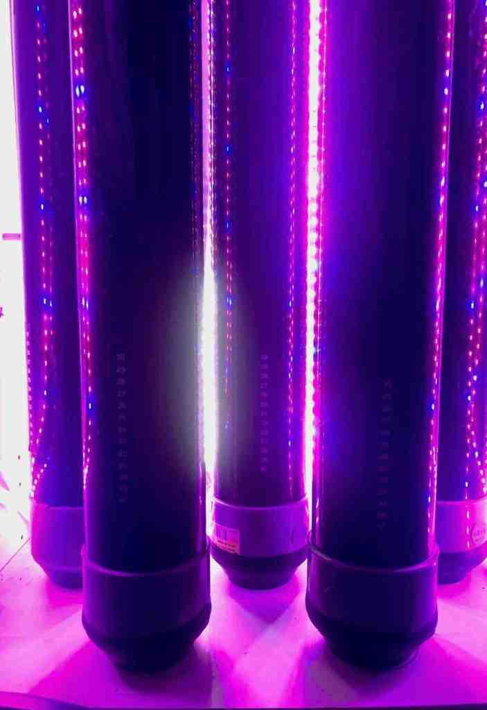 réacteur phytoplancton réalisé en tube acrylique en PMMA transparent.