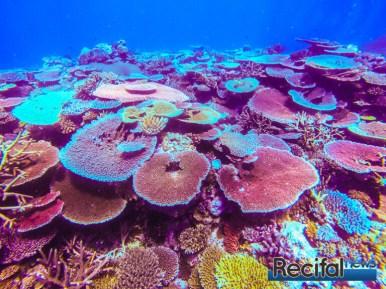 Le rêve de n'importe quel Aquariophile.