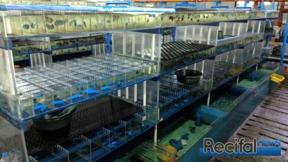 La partie de stockage des poissons importés.