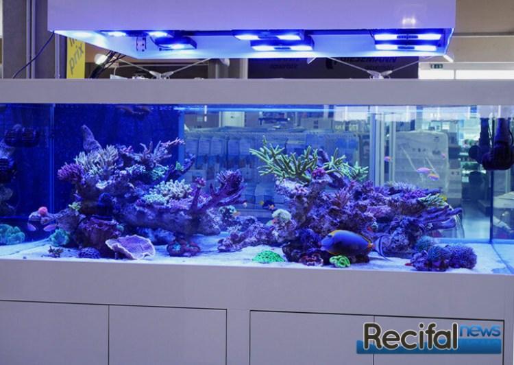 poisson-or-aquarium-recifal-face