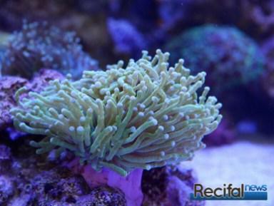 poisson-or-aquarium-recifal-glab