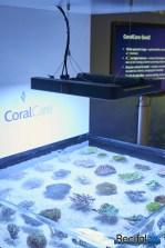 philips coralcare gen 2