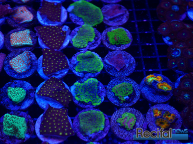 mace-vivarium-2019-coraux-14