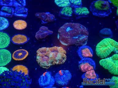 mace-vivarium-2019-coraux-28