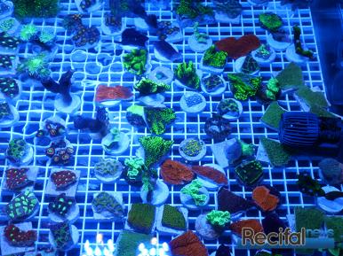mace-vivarium-2019-coraux-30