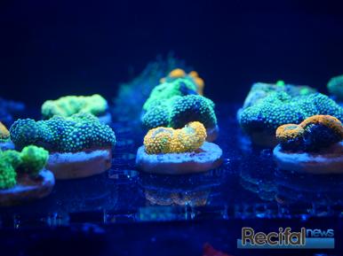 mace-vivarium-2019-coraux-8