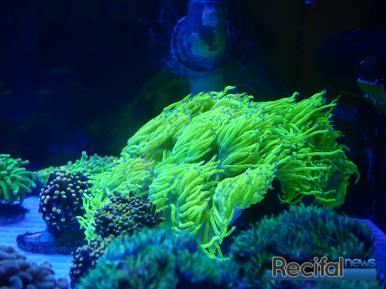 mace-vivarium-2019-coraux-9