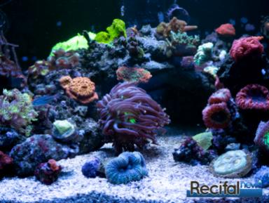 philips-coralcare-gen2-2020-corail-4