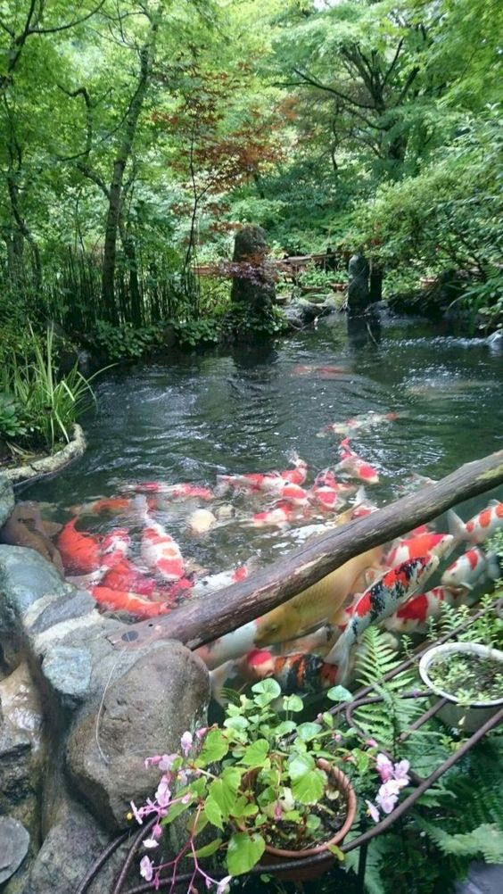koi pond landscaping 3