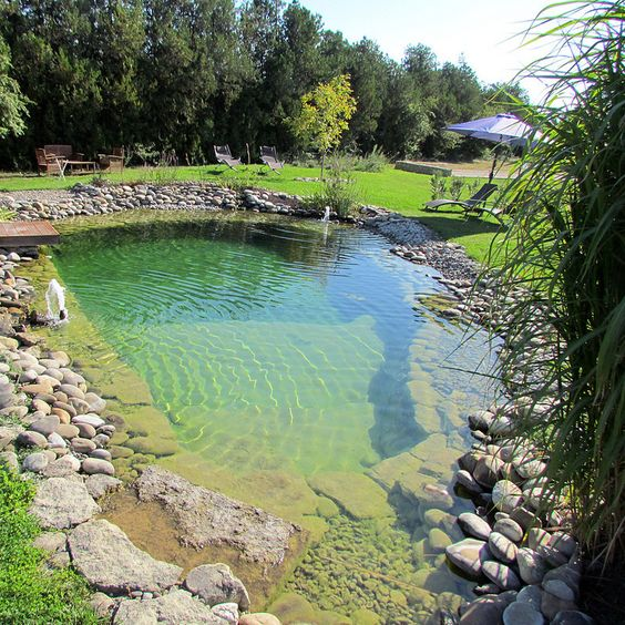 natural swimming pool 1