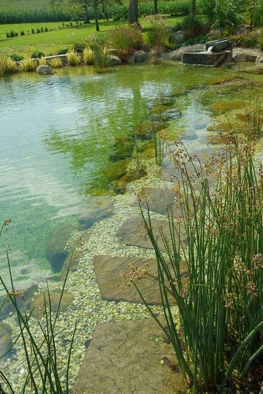 natural swimming pool 13