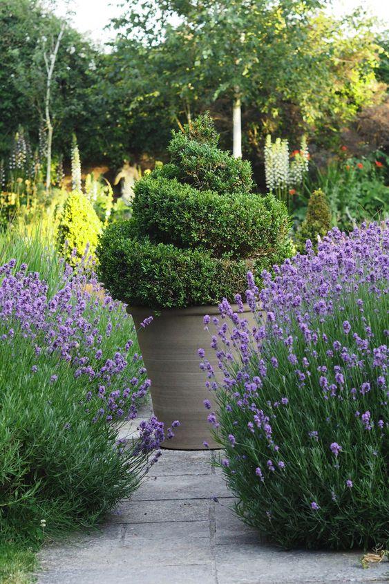 flower backyard ideas 7