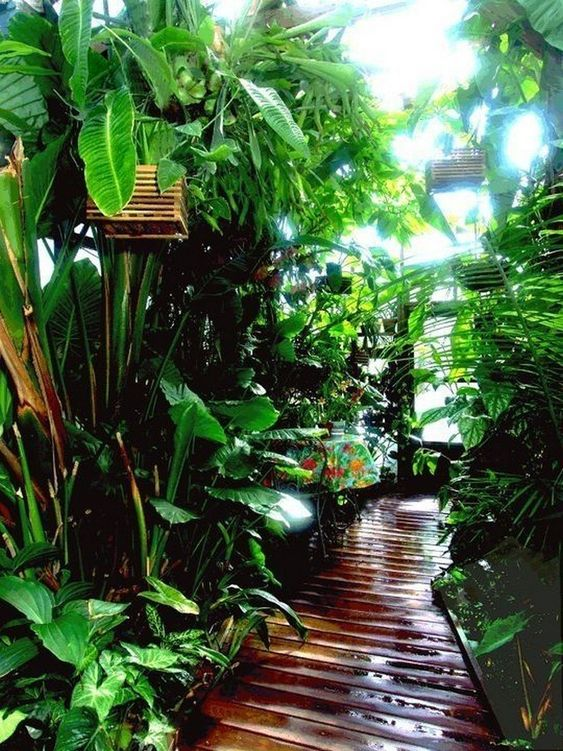 tropical backyard ideas 19