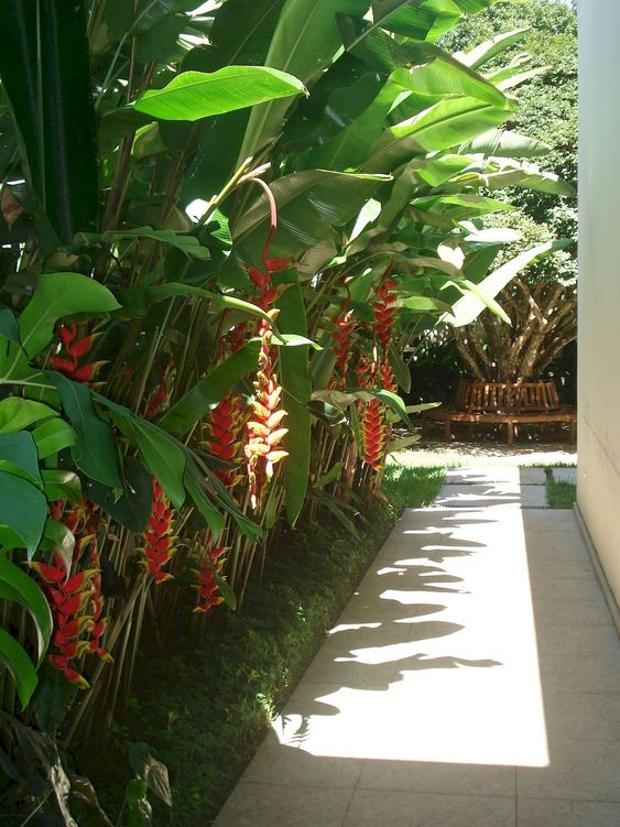 tropical backyard ideas 20