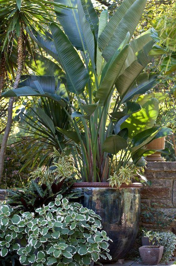 tropical backyard ideas 5