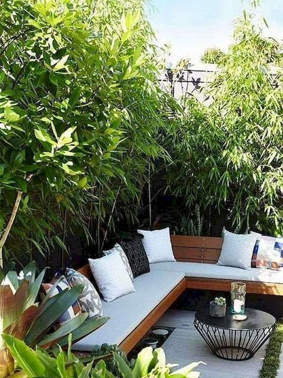 backyard trees ideas 18