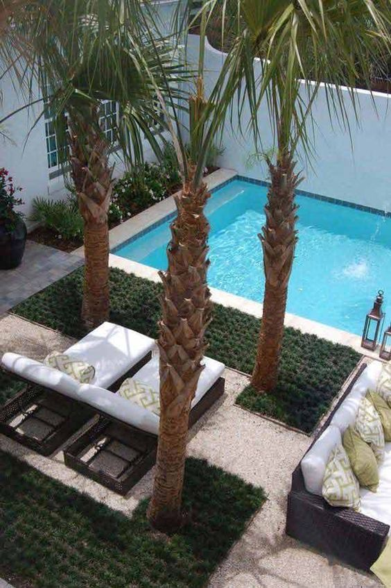 backyard trees ideas 21