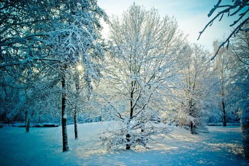 photos_snowy_landscape