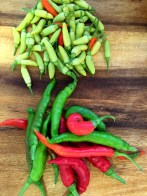 Cayenne and tabasco peppers