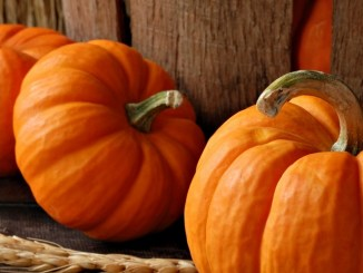 A Pumpkin Patch of Tidbits, Tips and Recipes!