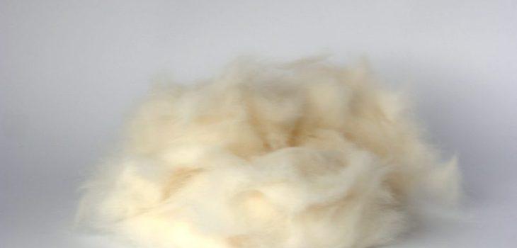 Pêlo Coelho Branco