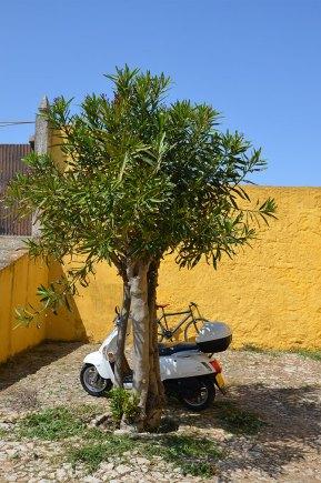 Olivier à Peniche, Portugal
