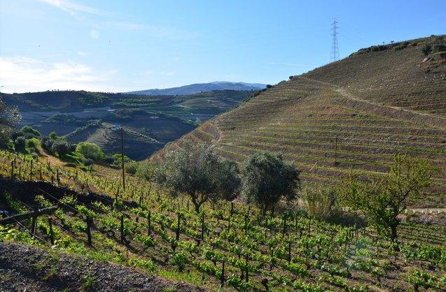 Vue sur les vignes de la vallée du Douro, Portugal