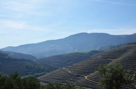 Magnifique vue sur les vignes de la vallée du Douro, Portugal