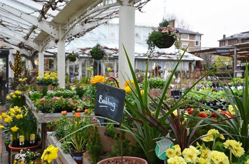 Plantes des serres du salon de thé Clifton Nurseries, Londres