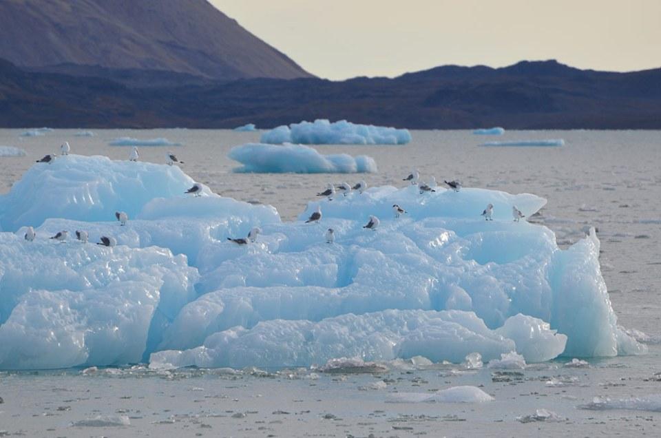 Des dizaines d'oiseaux perchés sur un iceberg qui flotte dans la baie de la Croix, Svalbard