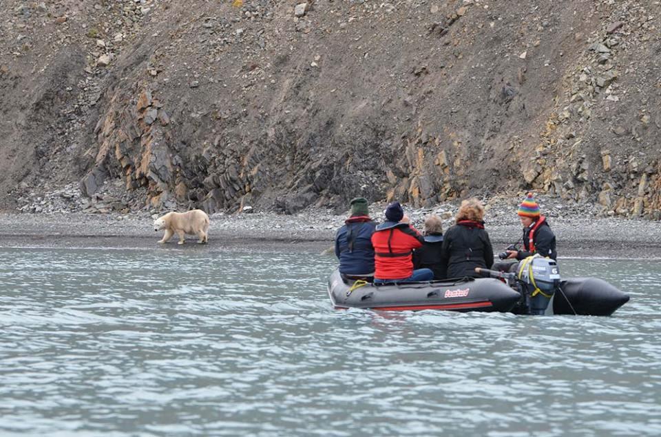 Nos amis sur un zodiac qui observent l'ours polaire avancer sur le rivage, Svalbard