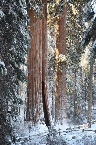 Grand Sequoia, Kings Canyon national park
