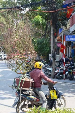 Un arbre sur un scooter, Hanoi, Vietnam