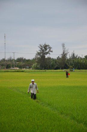 Campagne autour de Hoi An, Vietnam