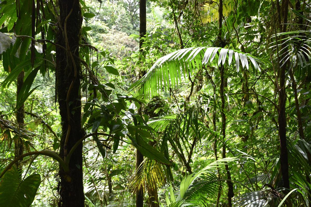 Verdure des forêts du Costa Rica