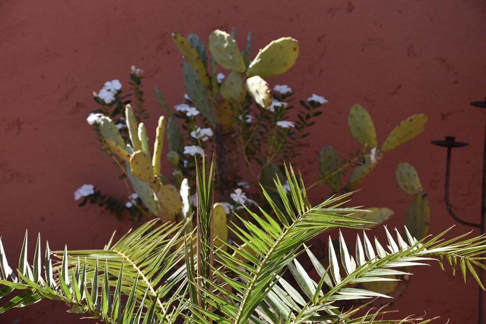Cactus du toit terrasse du Riad des Drôles, Marrakech