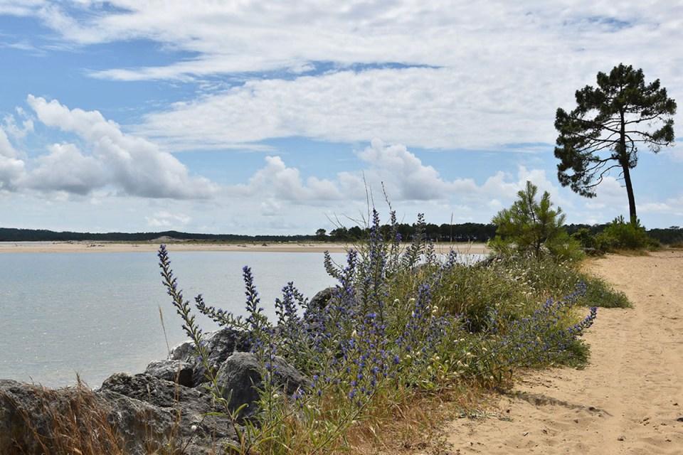 Végétation au bord de la plage de Gatseau, Ile d'Oléron