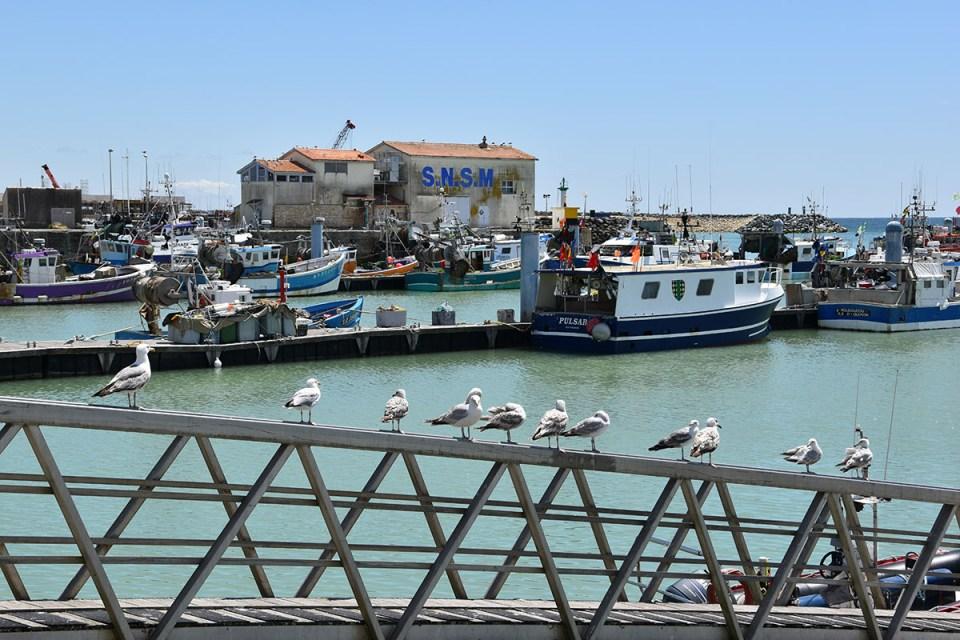 Bateaux du port de La Cotinière, Ile d'Oléron