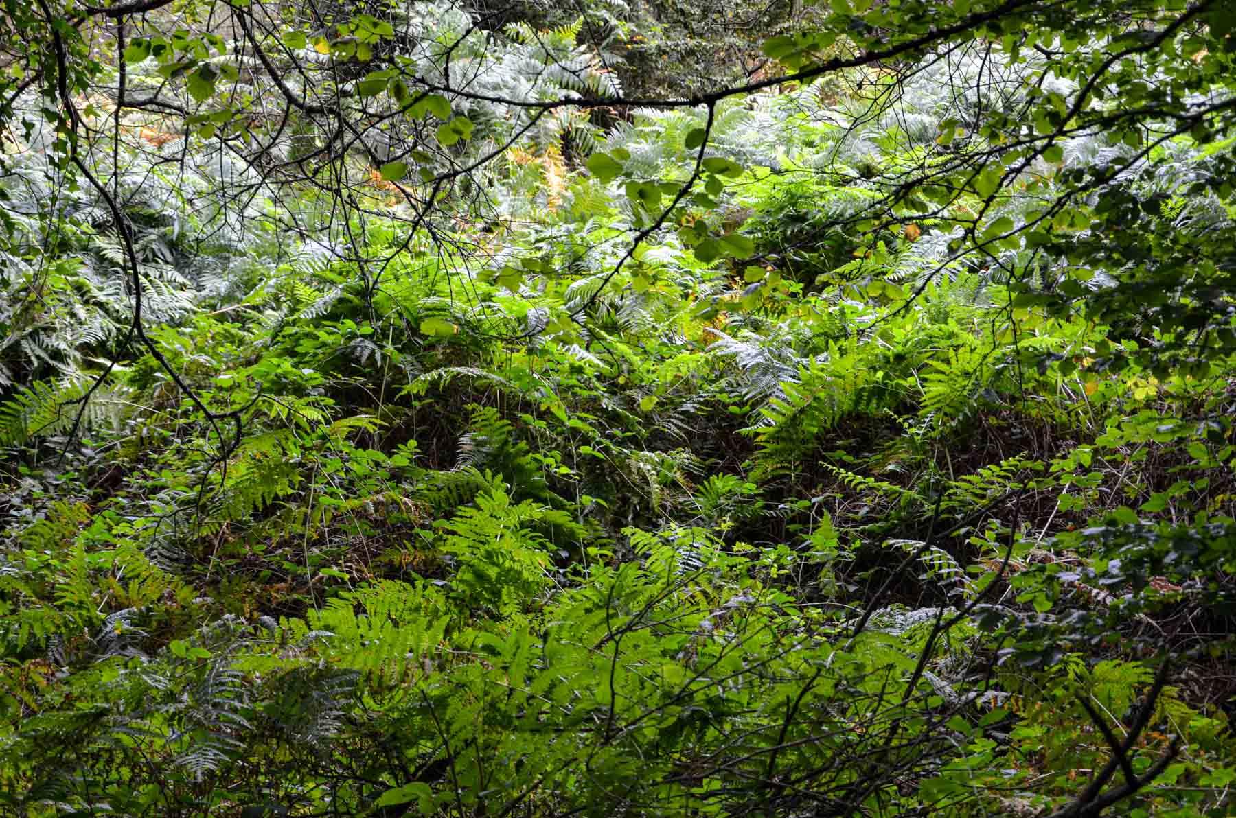 Forêt de Brocéliande, Bretagne
