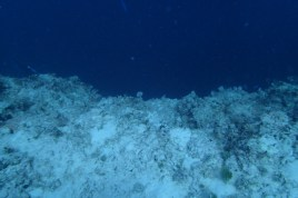 The edge of the blue at 20m or 65ft