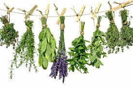 menopause herbs