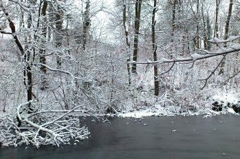Zugefrorener See, im Rahmen der eingeschneiten Bäume.
