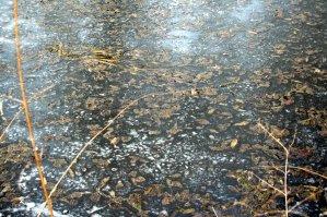 Zugefrorener See mit viel Blättern und Gestrüpp verschmutzt.